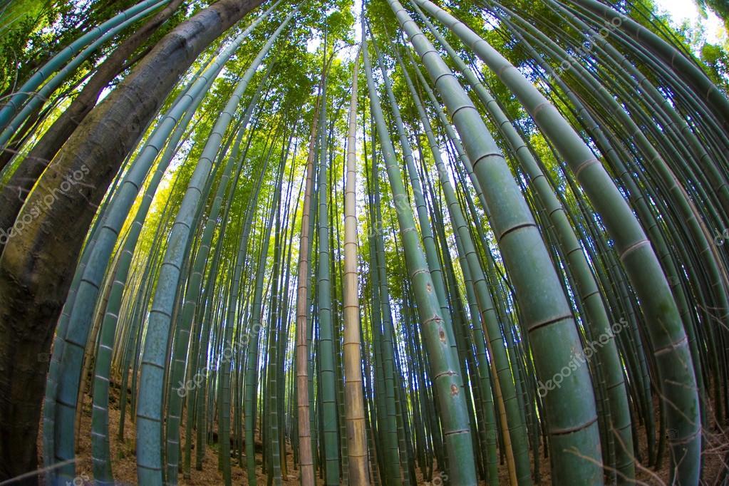 Bambuswald Arashiyama Stockfoto C Banky405 117044448
