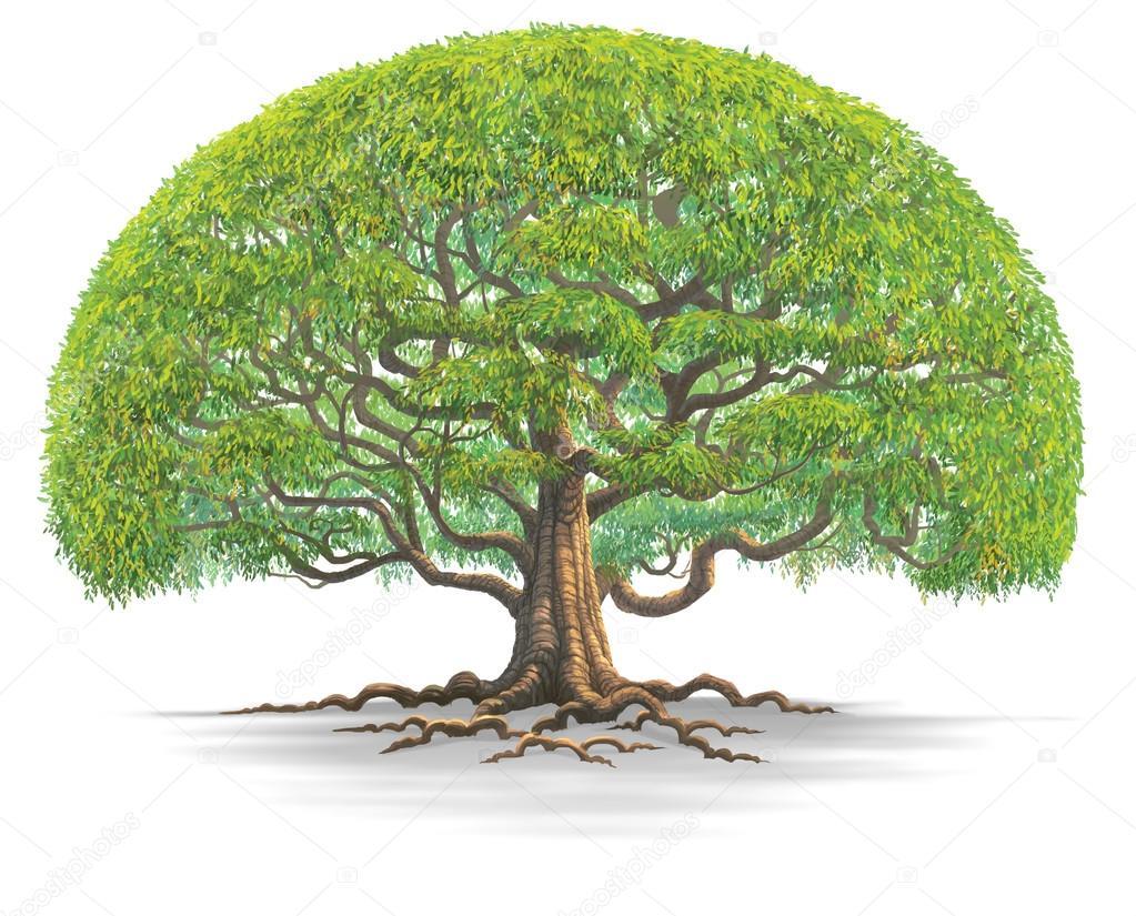 Big tree illustration isolated on white background