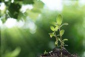 Mladá rostlina rostoucí s východem slunce v pozadí lesa
