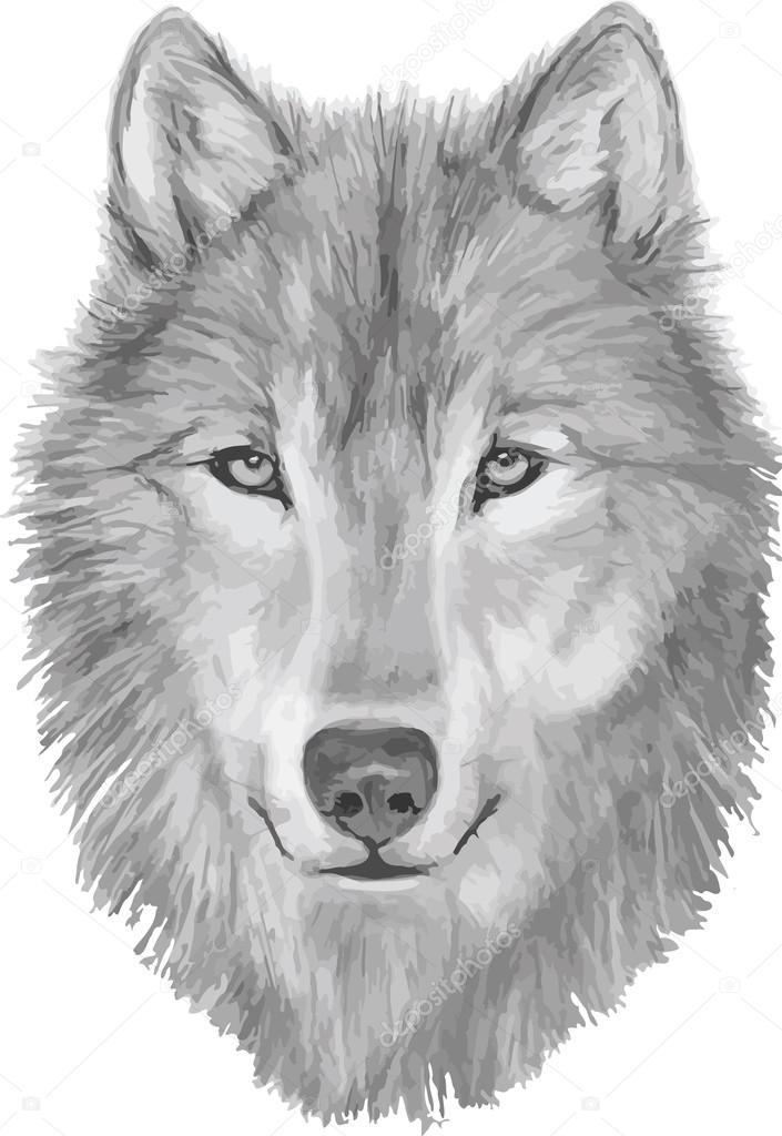 Wolf wolf zeichnung wolf gesicht wolf skizze for Lupo disegno a matita