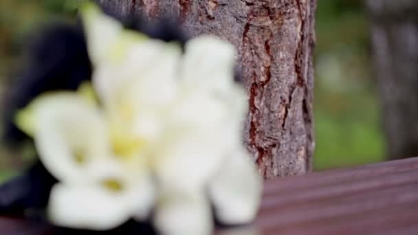 Bílé květy, černé peří
