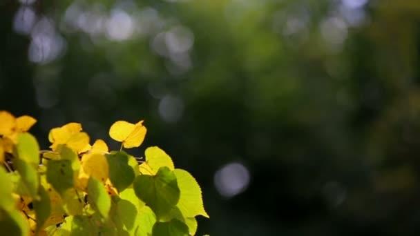 Podzim, žluté listy, defoliace