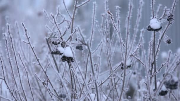 Krásné zimní jinovatka na větvi