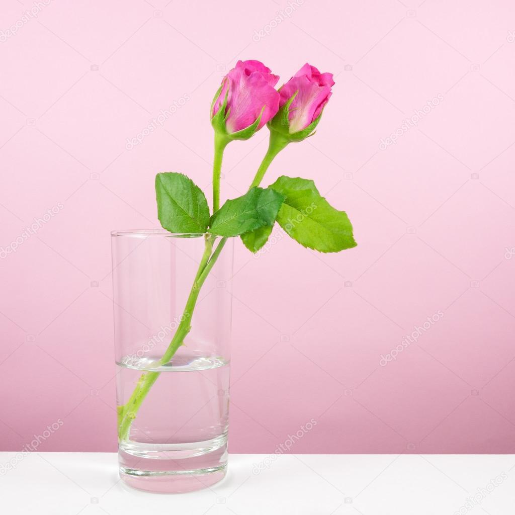 Thank U Next Descargar Gratis: La Flor De Rosas Hermosas Con Vaso De Agua