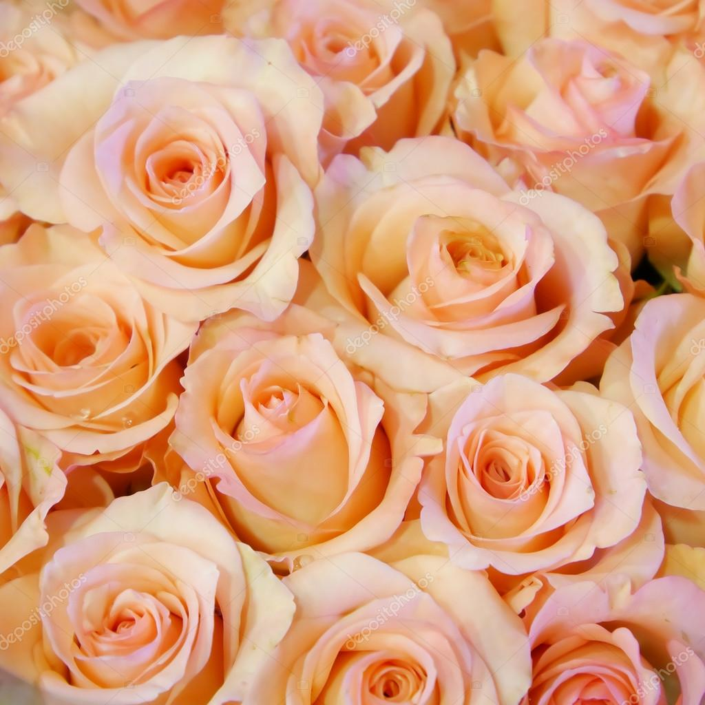 The Pretty Pale Pink Rose Bouquet Stock Photo Phasuthorn 94963646