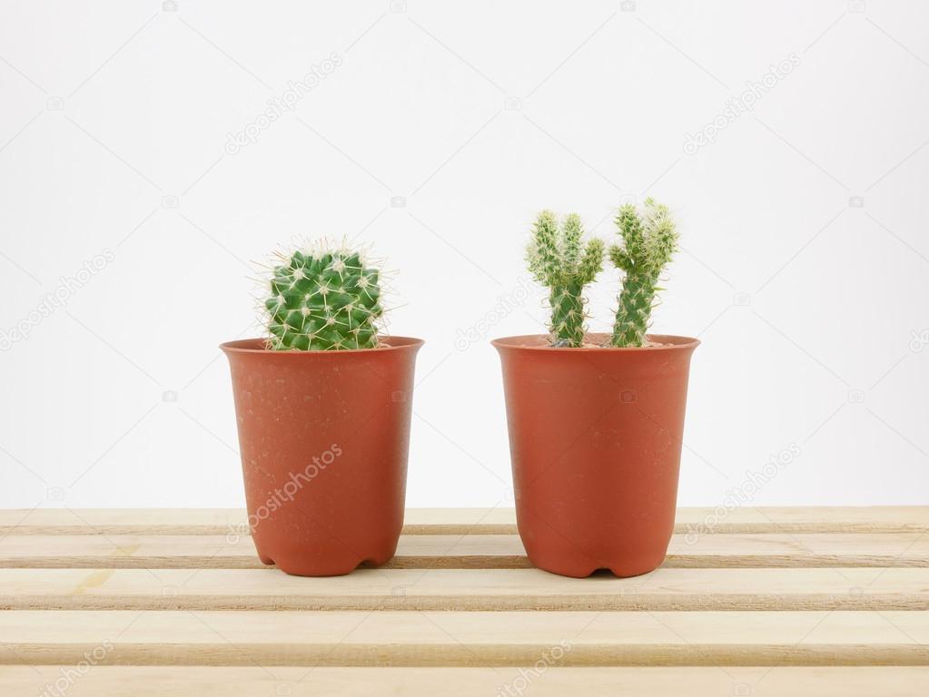 Mały Zielony Kaktus W Małe Doniczki Na Drewnianej Tacy