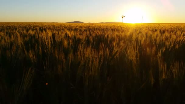 Malebná příroda Sunset krajina s pšeničné pole