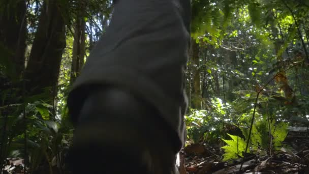 Hiking solo walking outdoors adventure in rainforest jungle