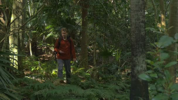 Man Hiking exploring In Jungle Rainforst using compass navigation orienteering