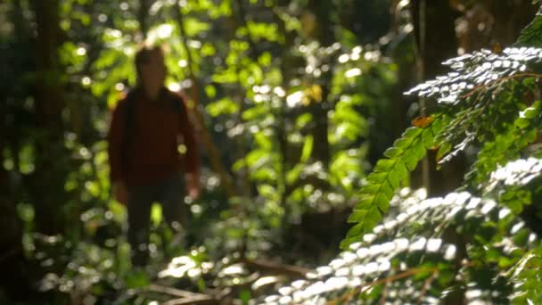 Man Hiking Walking In Outdoors Jungle