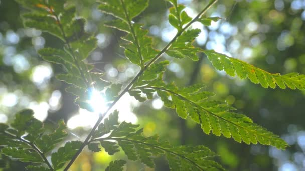 Nature lush green plant leaf foliage in forest sunlight