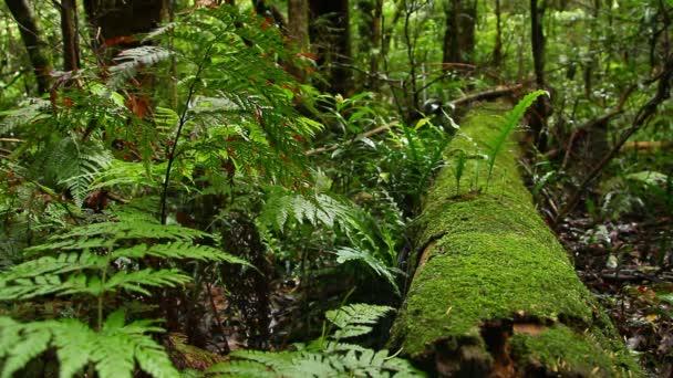 Deštný prales - Australská krajina