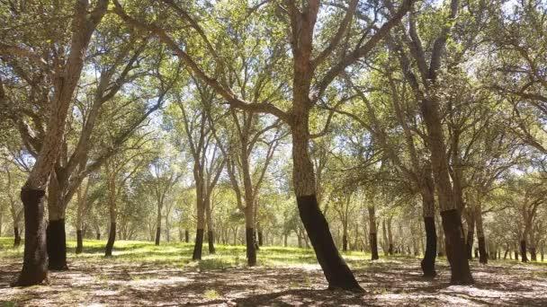 Letní den lesních stromů v korku