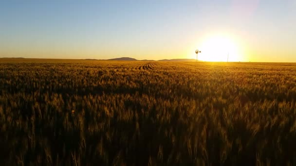 Nature Scenic Landscape Wheat field farming sunset