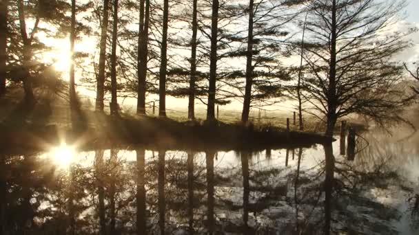 Ranní slunce skrze stromy vodní odraz