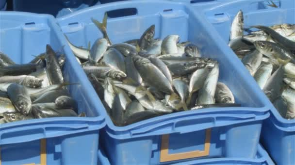 fish from a fishing boat being processed