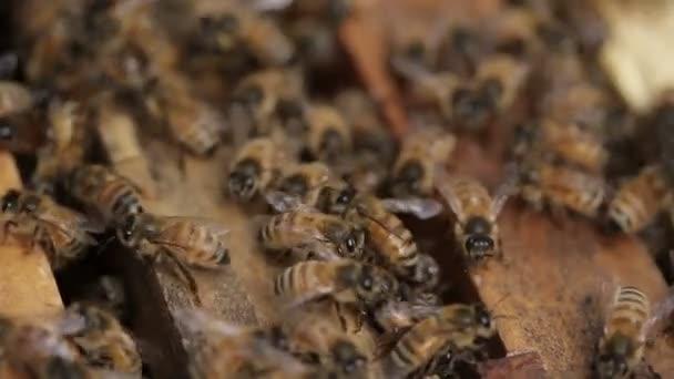 Macro Honey bee macro footage of bee hive and honey production beekeeper