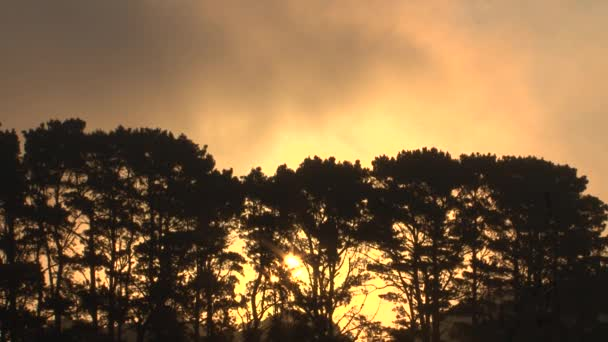 fenyőfák naplementekor