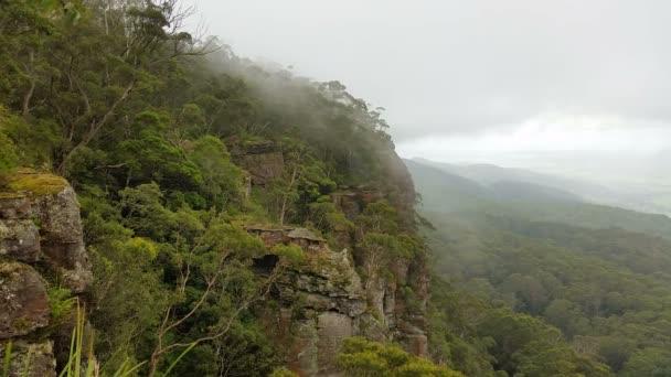 Precipitazione di Misty montagna foresta nebbia