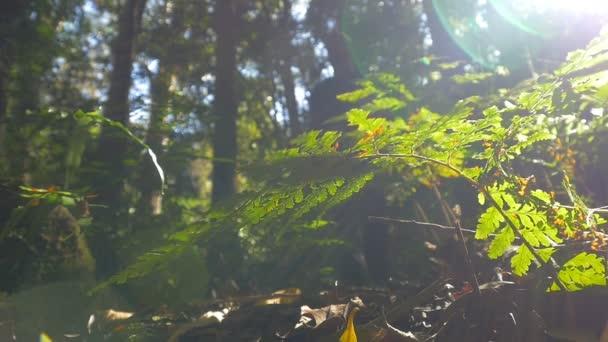 Hiking walking in rainforest