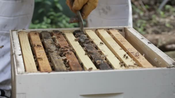 Hive Honey bee macro footage of bee hive and apiarist beekeeper