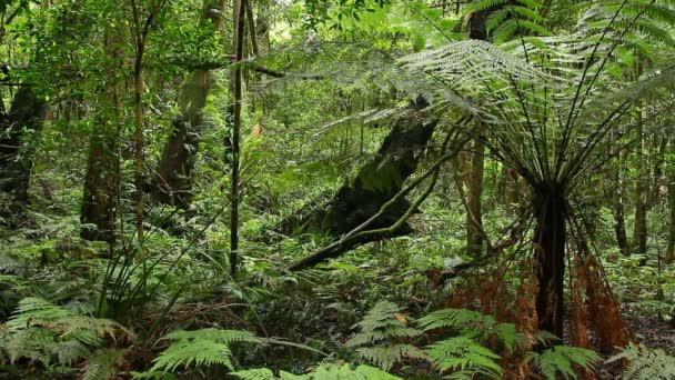Rainforest - Australian Landscape