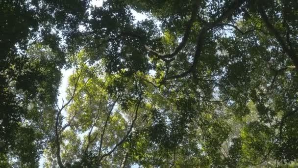 Rainforest džungle Woods