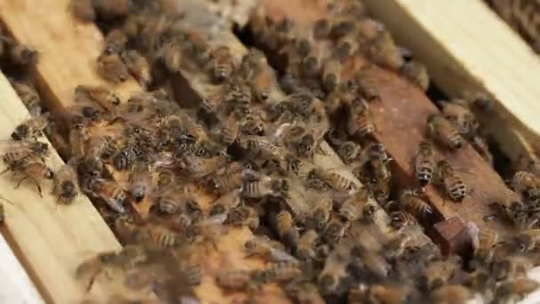 Bee macro footage of bee hive and honey production beekeeper