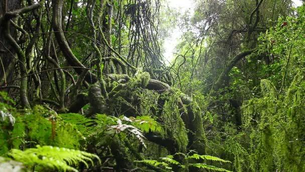 Old Growth Rainforest - Australian Landscape