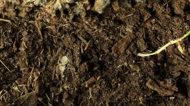 Cikáda vznikající ze země