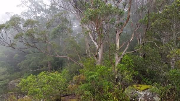 Mlha se válí v eukalyptové rainforest Austrálie krajina