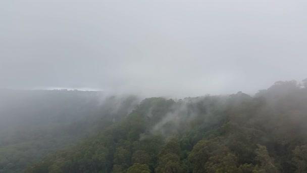 Mlžné hory lesní mlhové srážky