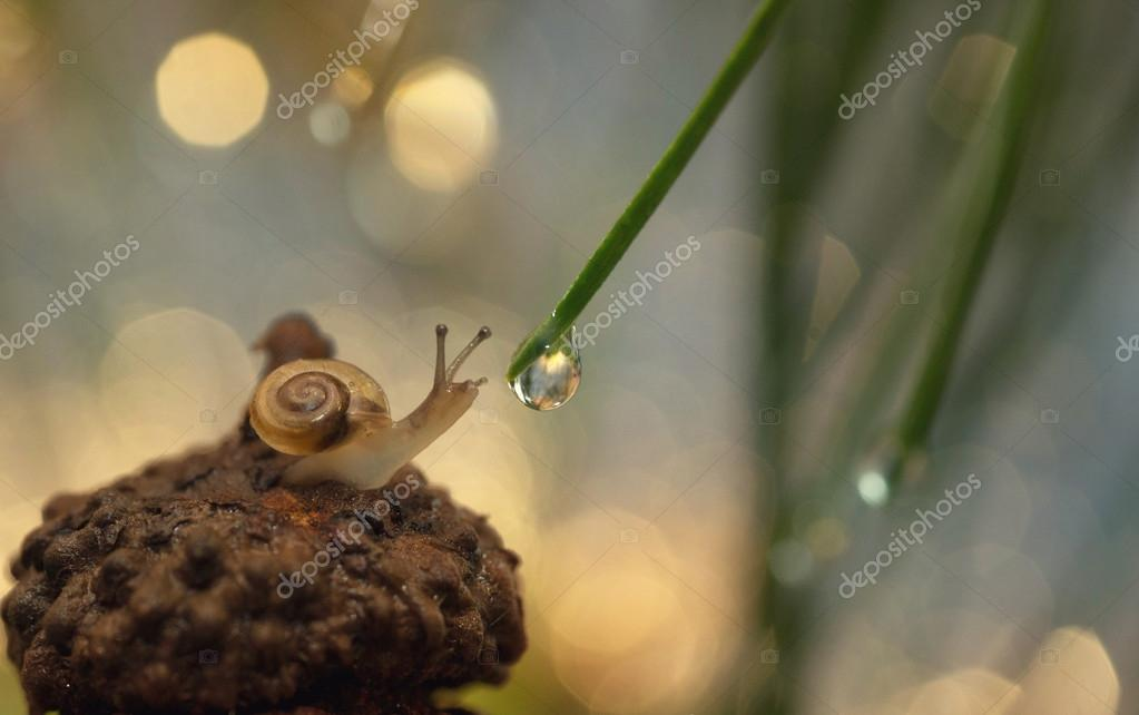 the snail tends to drop of water.
