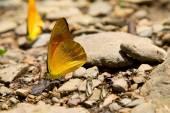 Fényképek Pillangó a sziklák