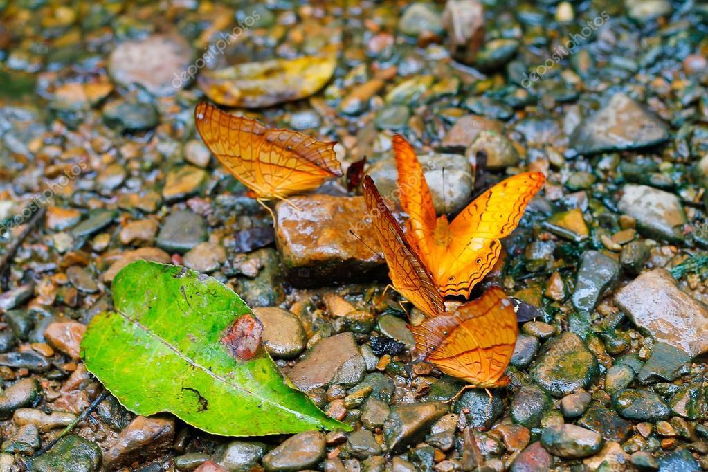 Schmetterlinge Die Futterung Auf Boden Stockfoto C Sit