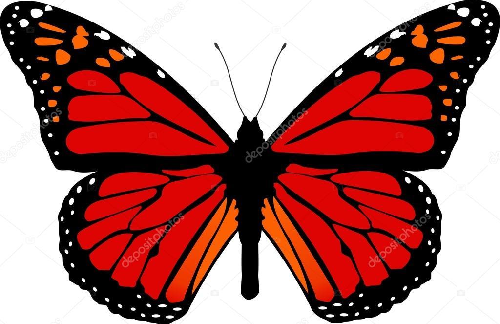 splendide farfalle colorate in natura vettoriali stock