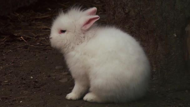 Roztomilý králík zblízka