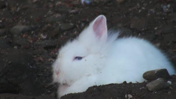 entzückendes Kaninchen aus nächster Nähe