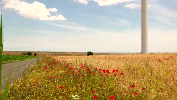 A szél-turbinák - búza field - pipacs virágok, 4k, túlzó hd, valós idejű