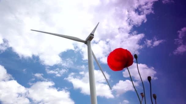 Větrná turbína na červený mák květ, 4k, reálném čase, ultra hd