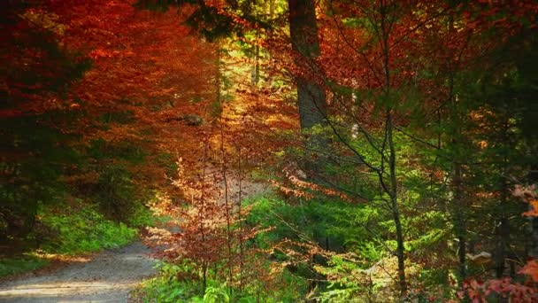 Colorful autumn trees in the forest with golden yellow leaves on path and grass, beautiful seasonal forest, sunny indian summer in Europe;ULTRA HD 4K, real time, zoom