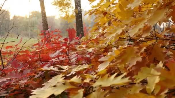 Červený široký list na stromě v západu slunce