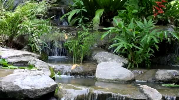 Kleiner Wasserfall Und Pool Mit Felsen Und Pflanzen In Der Natur U2014  Stockvideo