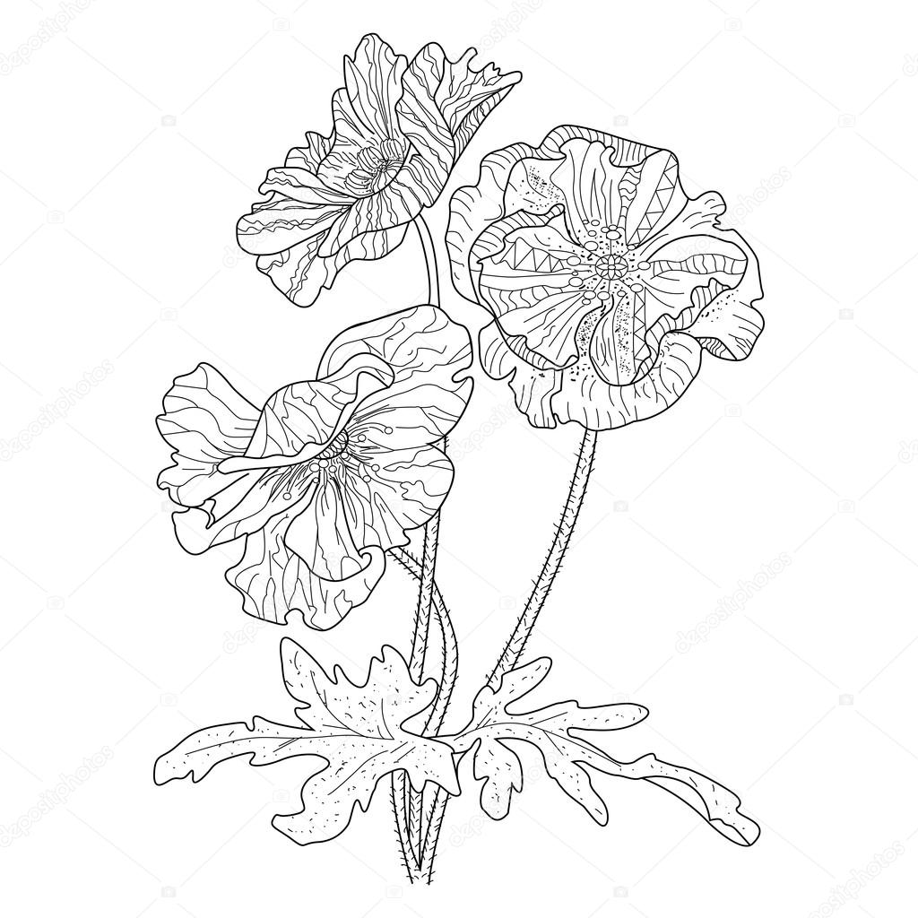 Poppy Flower Coloring Book For Adults Vector Stock Vector