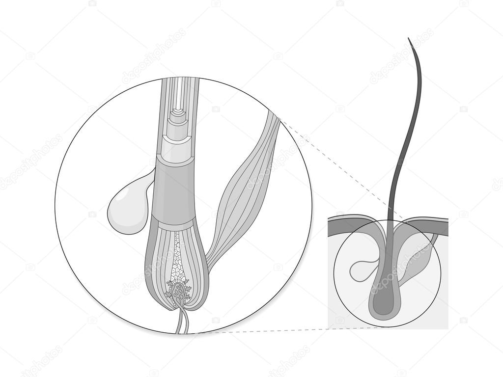 Vector de educación médica de cabello estructura — Archivo Imágenes ...