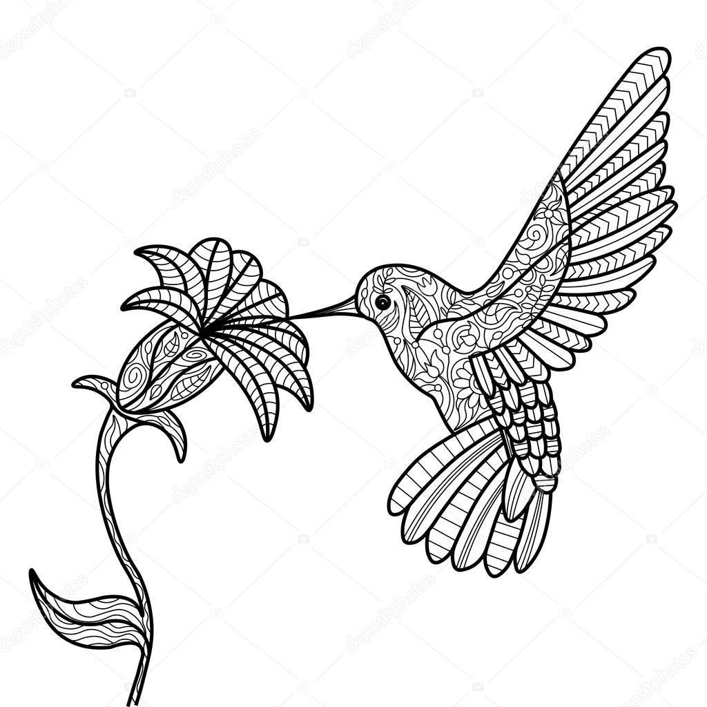 kolibrie coloring boek voor volwassenen vector