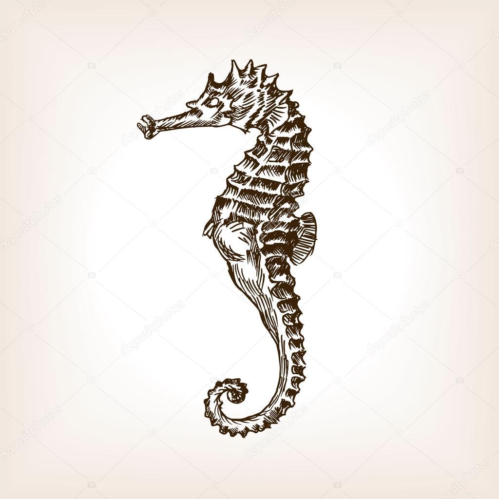 Vector de dibujo dibujado mano caballo de mar — Vector de stock ...