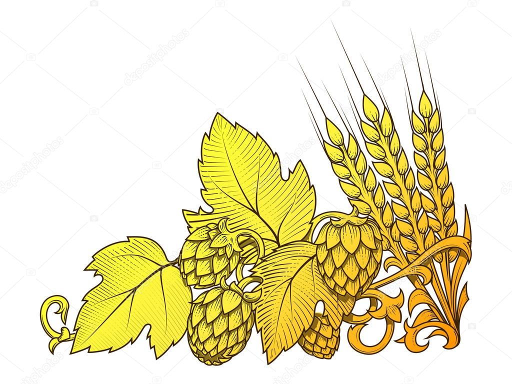 hopfen und gerste ornament vektor illustration Barley Wheat Vector Barley and Hops Drawing