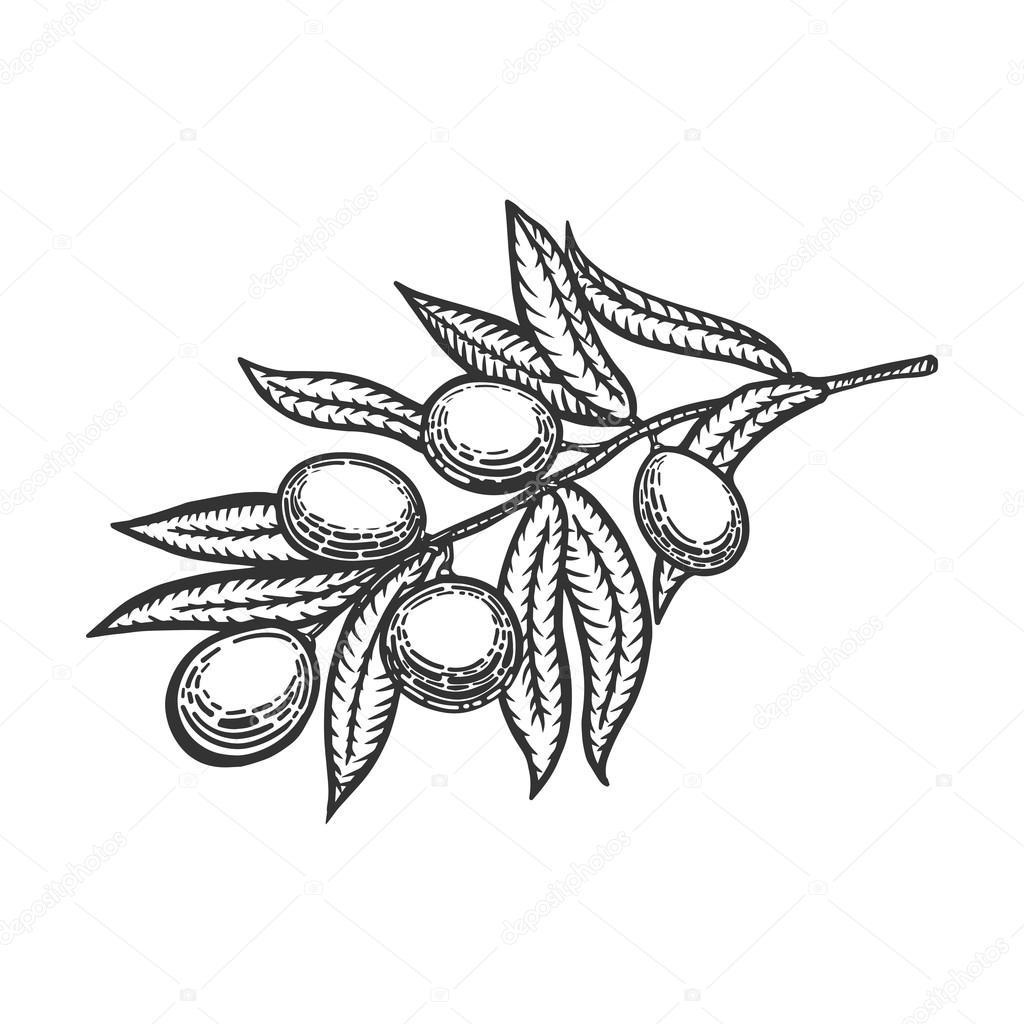 Оливковая ветвь гравировка стиль вектор — Векторное ... Оливковая Ветвь Вектор