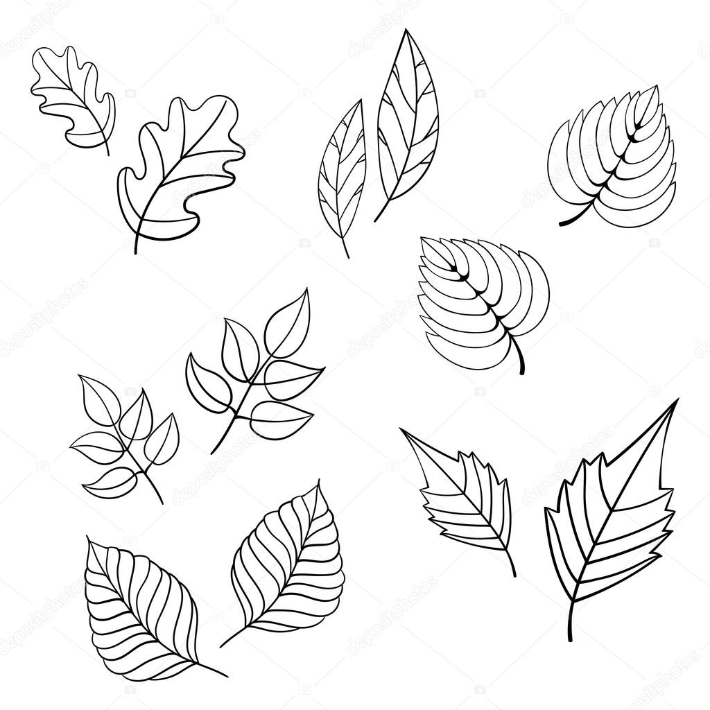 Black leaves vector illustration